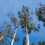Charla sobre a nova normativa forestal e de prevención de incendios